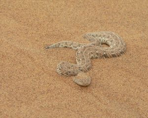 Auf Safari in Namibia: Schlangen-Lexikon