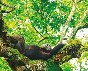 Ruanda: Gorillataufe, Nebelwälder und eine Bootsfahrt unter Vulkanen