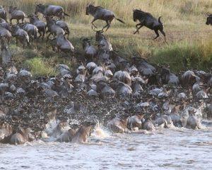 Tanzania: Große Tierwanderung in der Serengeti – Fressen und gefressen werden