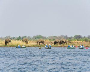 Zimbabwe: Praktische Reisetipps für eine Safari