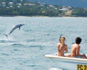 Mauritius: Delphinschwimmen - mit Rücksicht auf die Tiere und im Einklang mit der Natur