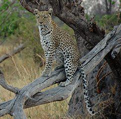Botswana: Iwanowski Mitarbeiterin Christina Miebach von ihrer Safari zurück