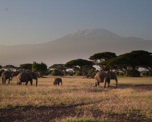 Kenia: Übernachten mit Blick auf den Kilimanjaro am Amboseli National Park