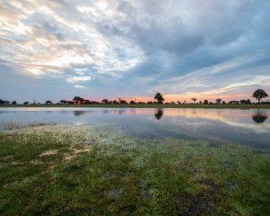 Simbabwe: Weiße Löwen im Hwange National Park