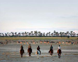 Südafrika/Namibia/Botswana: Wann ist die beste Reisezeit für Tierbeobachtungen?
