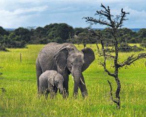 Kenia: Lewa Wildlife Conservancy jetzt auch UNESCO-Welterbestätte