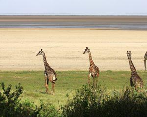 Tansania: Geheimtipp Lake Manyara Nationalpark