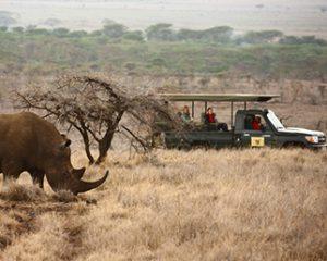 Kenia, Botswana, Namibia: Die drei besten Safari-Ziele der Welt