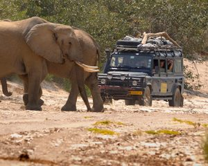 Südafrika: Richtiges Verhalten bei der Tierbeobachtung im Kruger Nationalpark