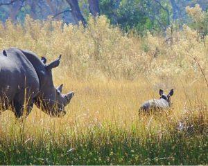 Kenia: Rhino Awareness-Programm - Neues Schutzprogramm für Nashörner in Kenia