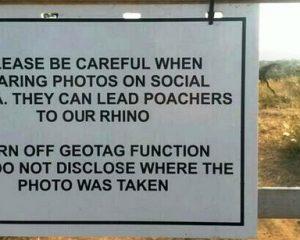 Südafrika: Geofunktion von Digitalkameras lockt Wilderer auf die Fährte seltener Tiere