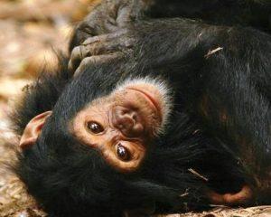 Tansania: Ursprünglich und naturnah – Fly-In-Safari in Tansanias unentdeckten Westen