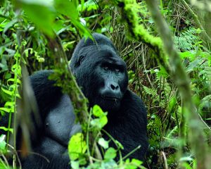 Ruanda: Spannende Reiseziele und Ausflugstipps