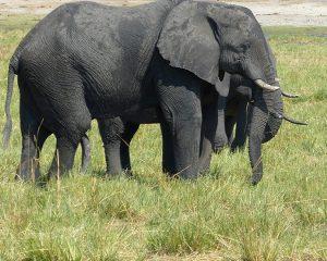 Einlassbestimmungen für den Chobe National Park in Botswana: Informationen für Selbstfahrer