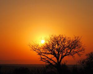 Safaris und Kultur im Norden Südafrikas - Reisebericht Teil 2