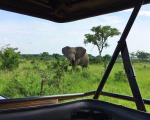 Selbstfahrer-Reisen in Uganda: Eine tolle Erweiterung für wahre Afrika-Fans