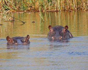 Namibia und Botswana für Selbstfahrer: Unsere Mitarbeiterin berichtet – Teil 1