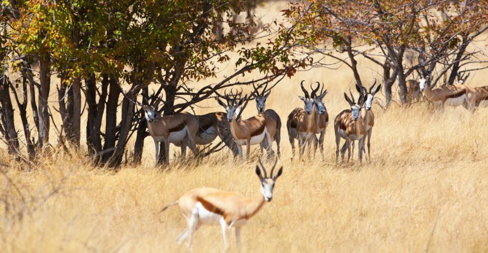 Afrikanische Landschaft mit Tieren - Iwanowski's Afrika-Blog