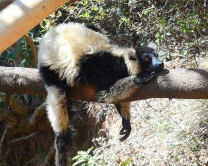 Tonga Soa Madagaskar! Eine Reise dorthin, wo der Pfeffer wächst