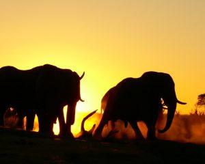 KAZA – Afrikas zukunftsweisendes und nachhaltiges Schutzprojekt
