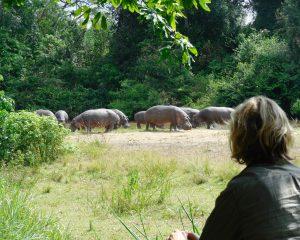 Von Gorillas im Nebel und Nilpferden in der Nacht – Eine Camping-Safari durch Uganda