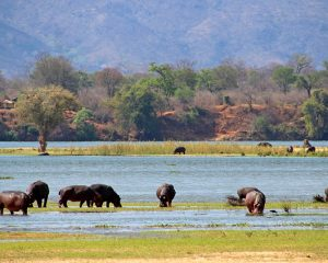Spannende Safaritage im abgelegenen Mana Pools National Park in Simbabwe