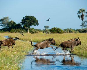 High-End-Ökotourismus mit Wilderness Safaris