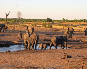 Entspannung am Lake Kariba & Fotoshooting mit Elefanten im Hwange National Park