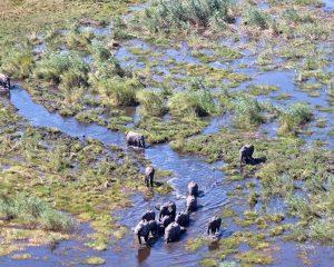 Mokoro, Helikopter und Co. – zu Wasser, zu Lande und in der Luft durch Botswana