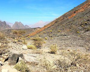 Im Sommer in den Oman – Kühle Berge, Walhaibeobachtung, Feilschen auf dem Souq