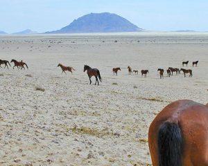 Das Geheimnis der Namib-Wildpferde