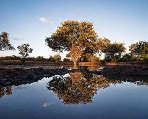 Fotografieren auf Safari – So geht's richtig