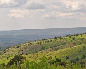 Akagera National Park – auf Pirschfahrt in Ruanda