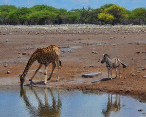 Die Dos and Don'ts auf Safari – Tipps für einen Besuch im Nationalpark