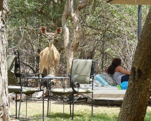 Elefanten an der Straße und Kudus am Pool – Auf dem Weg nach Etosha