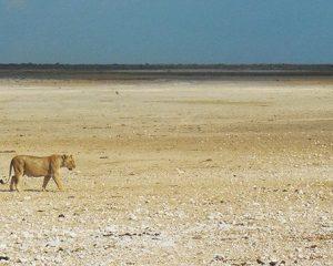 Namibia das Land der Wüste, wo Dürreperioden Normalität sind