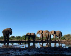 Auf neuen Pfaden durch Südafrika und Botswana | Teil 2