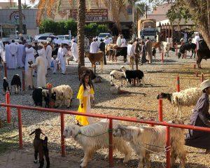 Roadtrip durch den Oman: Zwei Männer und die Wüste