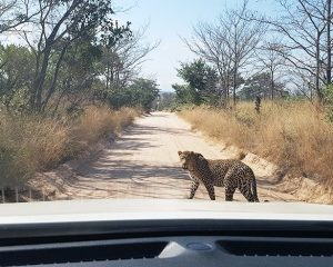 Von Südafrika nach Mosambik - Teil 2
