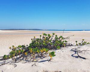 Von Südafrika nach Mosambik – Teil 3