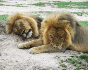 Hwange National Park: Ein Paradies für Tiere