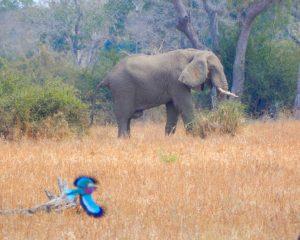Teil 1: Sambia – das geheime Paradies Afrikas
