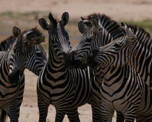 Nun wird es Zeit: Jetzt unbedingt buchen – Afrika erlebt einen Nach-Corona-Boom!