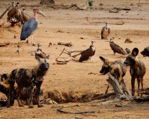 Teil 2: Sambia - das geheime Paradies Afrikas