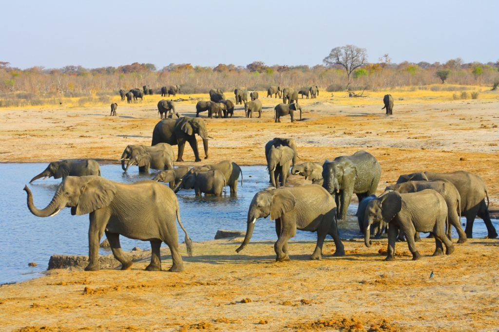 Simbabwe Hwange National Park Elefanten Iwanowskis Reisen - afrika.de