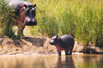 Best of Uganda: Mitten im puren Afrika