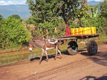 Äthiopien Eselskarren Junge Begegnung unterwegs Iwanowskis Reisen - afrika.de