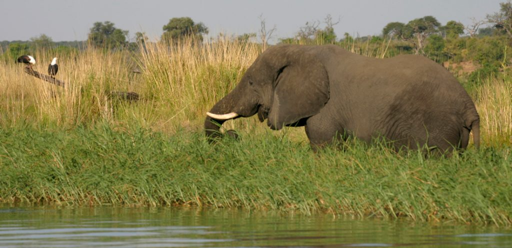 botswana-chobe-elephant-camp1