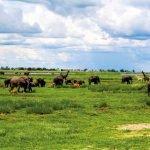 Botswana Chobe National Park Iwanowskis Reisen - afrika.de