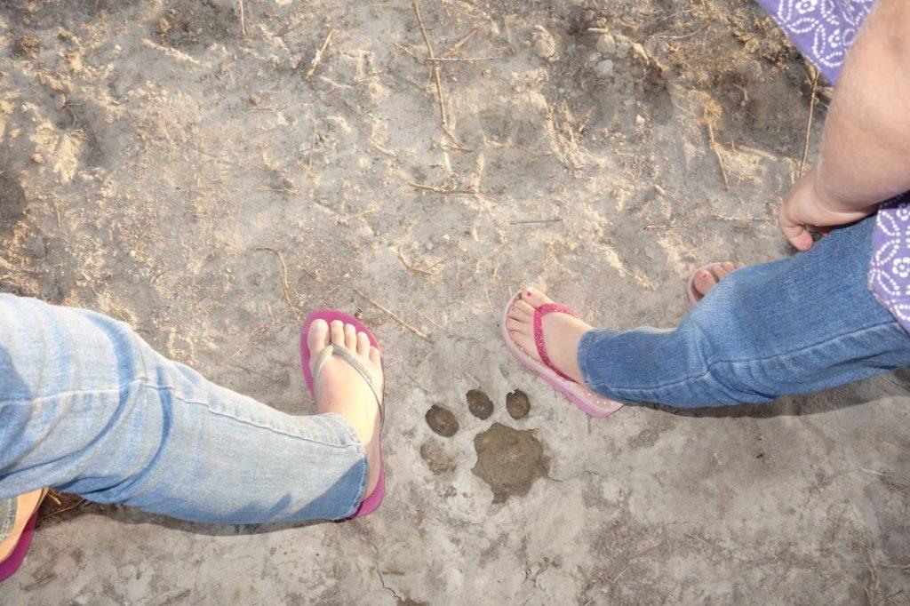 Botswana Rundreise mit Kindern Fußspurenvergleich Iwanowskis Reisen - afrika.de
